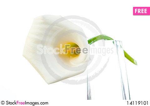Free Calla Lily Stock Image - 14119101