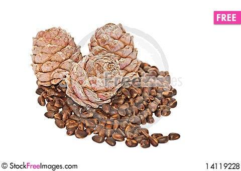 Free Cedar Nutlets Royalty Free Stock Photos - 14119228