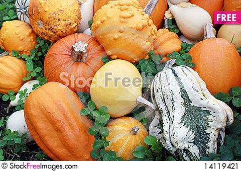 Free Various Of Pumpkins Stock Image - 14119421