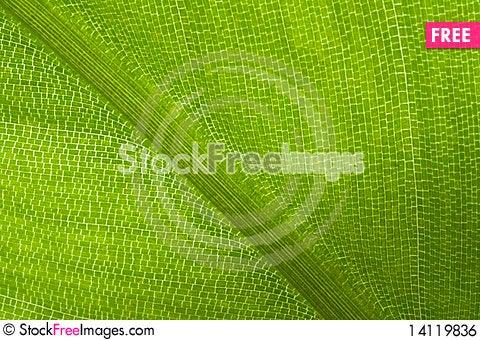 Free Light Shining Through Leaf Royalty Free Stock Image - 14119836