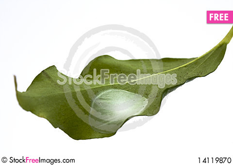 Free Isolated Leaf With Spider Eggs Stock Photo - 14119870