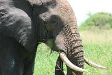 Africa Tanzania Elephant Image Royalty Free Stock Photos