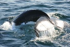 Whale S Tail Royalty Free Stock Photos