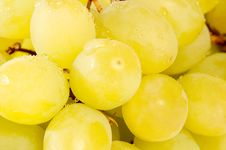 Free Grapes Stock Images - 14111874