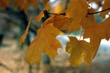 Free Leaves In Color Stock Image - 14112701
