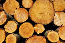 Free Pile Of Wood Royalty Free Stock Image - 14113666