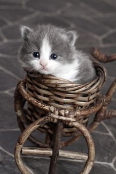 Grey And White Kitten In Basket