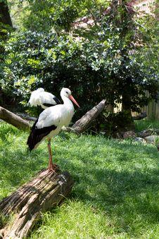 Free White Stork Royalty Free Stock Photo - 14115185