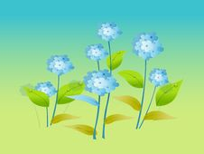 Free Blue Flowers Royalty Free Stock Image - 14115856