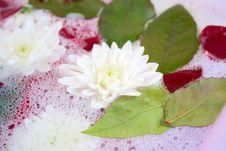 Free Aromatherapy Royalty Free Stock Photos - 14116288