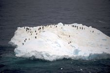 Free Adelie Penguin Antarctica Royalty Free Stock Photography - 14117517