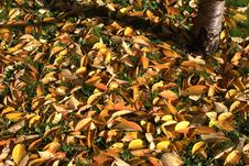 Herbstlaub Royalty Free Stock Images