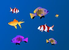 Free Fishes Aquarium Background Stock Photography - 14118922