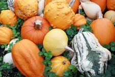 Free Various Of Pumpkins Stock Image - 14119421