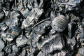 Free Burnt Stock Photo - 14128710
