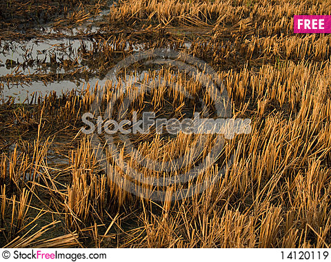 Free Field Burn Royalty Free Stock Images - 14120119