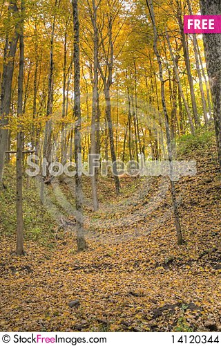 Free A Forest Ful Of Yelow Autumn Colors. Stock Images - 14120344