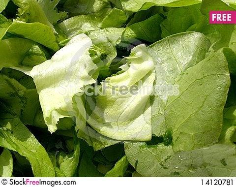 Free Fresh Salad Stock Image - 14120781