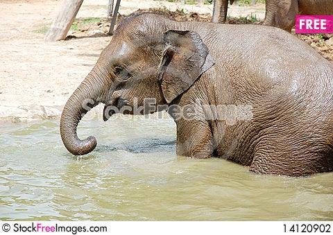 Free Elephant Stock Photography - 14120902