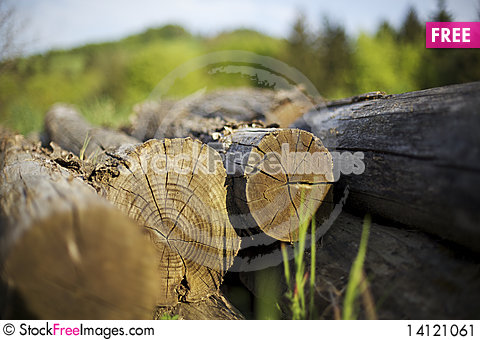 Free Tree Trunks Heap Stock Image - 14121061