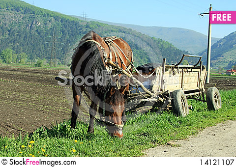 Free Beautiful Horse Eating Grass Royalty Free Stock Photography - 14121107