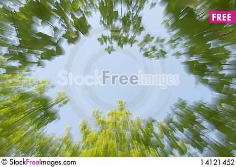 Free Foliage Of Trees, Blur Stock Photography - 14121452