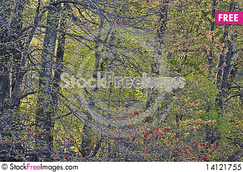 Free Spring Forest Royalty Free Stock Photo - 14121755