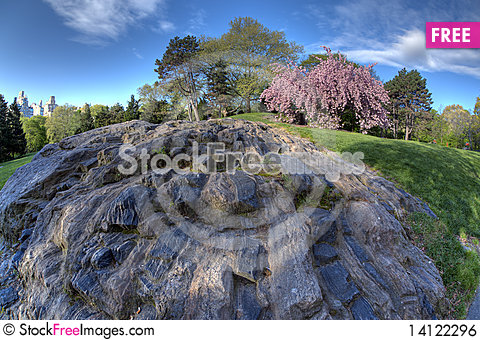 Free Spring In Central Park Royalty Free Stock Image - 14122296