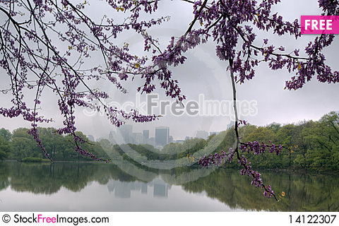 Free Spring In Central Park Royalty Free Stock Photography - 14122307