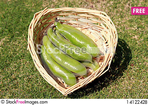 Free Fava Or Broad Beans Royalty Free Stock Photos - 14122428