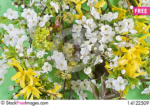 Free Blossoming Plum And Forsythia Maluch Royalty Free Stock Images - 14122509