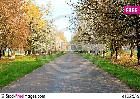 Free Road With Flowerings Trees Royalty Free Stock Image - 14122536