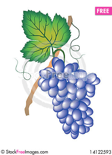 Free Hanging Bunch Of Grapes Stock Photos - 14122593
