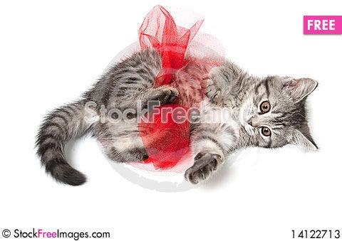 Free Isolated Grey Kitten Stock Photos - 14122713