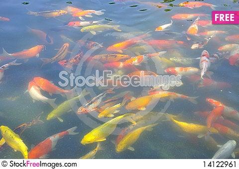 Free Fish Stock Image - 14122961