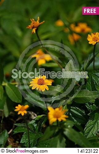 Free Wild Flowers Stock Photography - 14123122