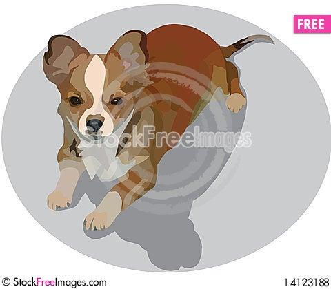 Free Little Dog Royalty Free Stock Photos - 14123188