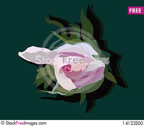 Free Bud Of Rose Stock Photo - 14123200