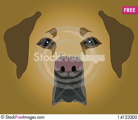 Free Muzzle Of Dog Stock Photo - 14123300
