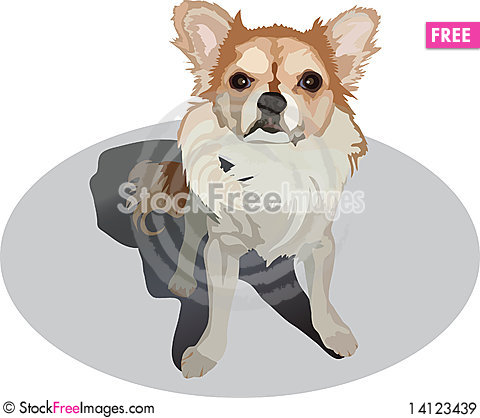 Free Little Dog Royalty Free Stock Images - 14123439