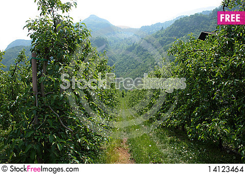 Free Planting Apple Stock Images - 14123464