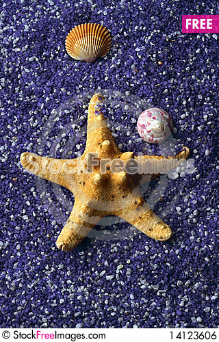 Free Seashell And Starfishes On Lilac Sand Royalty Free Stock Image - 14123606