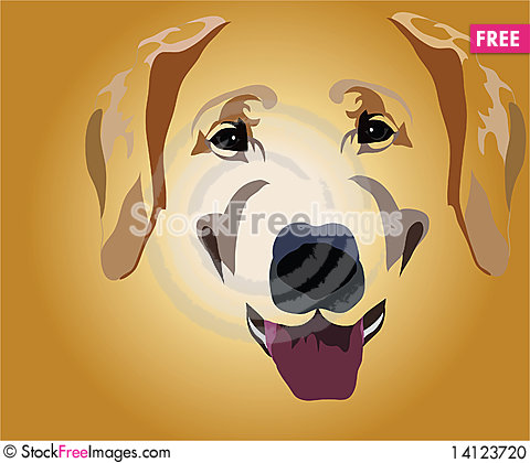 Free Muzzle Of Dog Stock Photo - 14123720