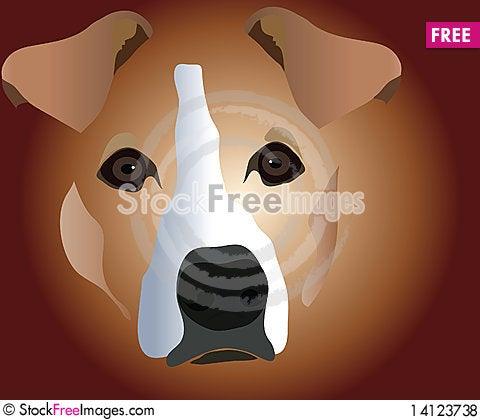 Free Muzzle Of Dog Royalty Free Stock Photos - 14123738