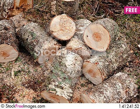 Free Chopped Logs Stock Photography - 14124152