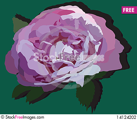 Free Bud Of Rose Stock Photography - 14124202