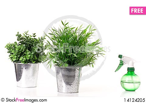Free Two Flowers In Metal Pots And Spray Bottle. Royalty Free Stock Photo - 14124205