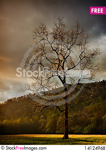 Free Single Walnut Tree In The Meadow Royalty Free Stock Photos - 14124968