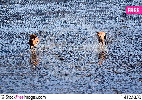 Free Mud Sprint Stock Photo - 14125330