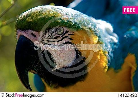 Free Colourful Ara Stock Photo - 14125420